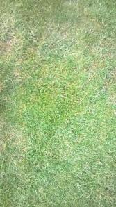 närbild franskt gräs