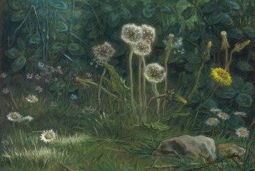 Millet dandelions-1868