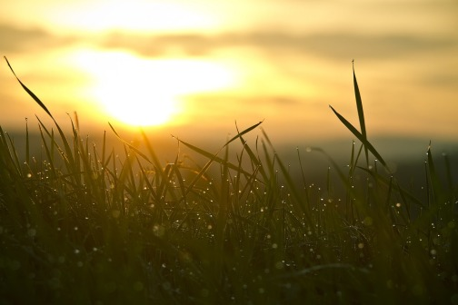 grass, sunrise