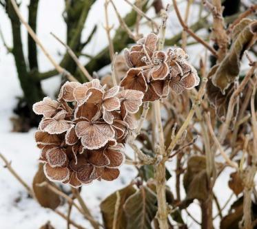winter-946141_960_720