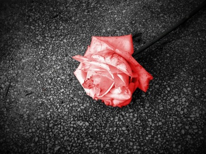 rose-on-the-street
