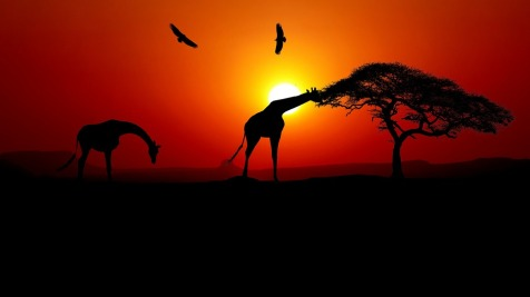 africa sunset-3750152_960_720